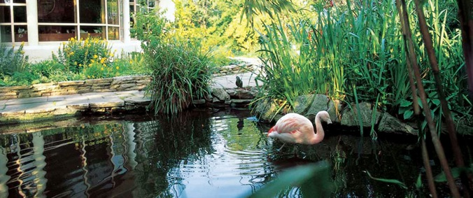 roofgardens-flamingo_pond-large