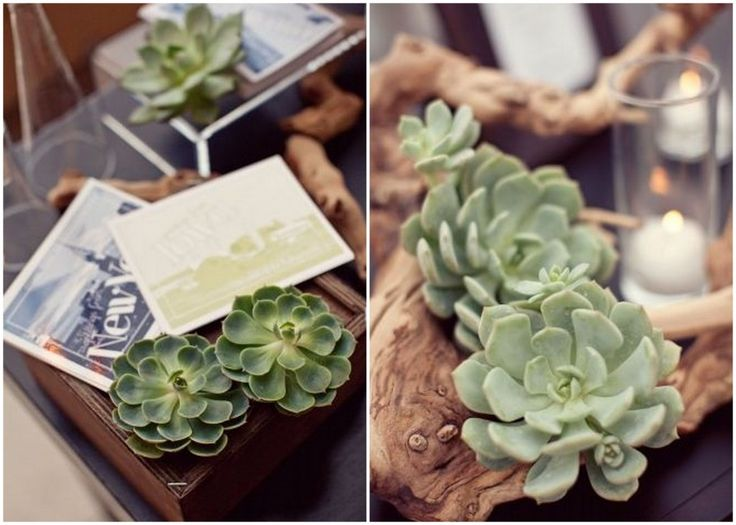 Ultimate Inspiration Guide for Succulents at your Wedding | Bridal Musings Wedding Blog 28