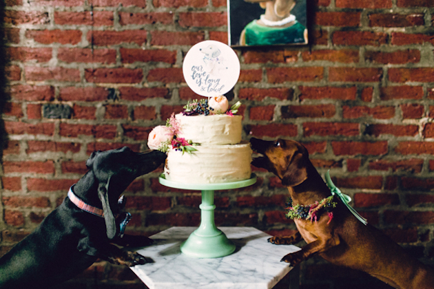 Adorable Dog Wedding | Danfredo Photos + Films | Bridal Musings Wedding Blog 36